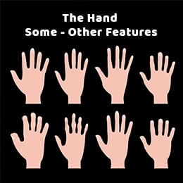 THE HAND - SOME OTHER FEATURES