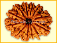 Twelve Facet Rudraksha