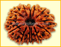 Thirteen Facet Rudraksha