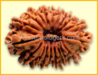Twenty One Facet Rudraksha